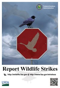 Report a Wildlife Strike Poster